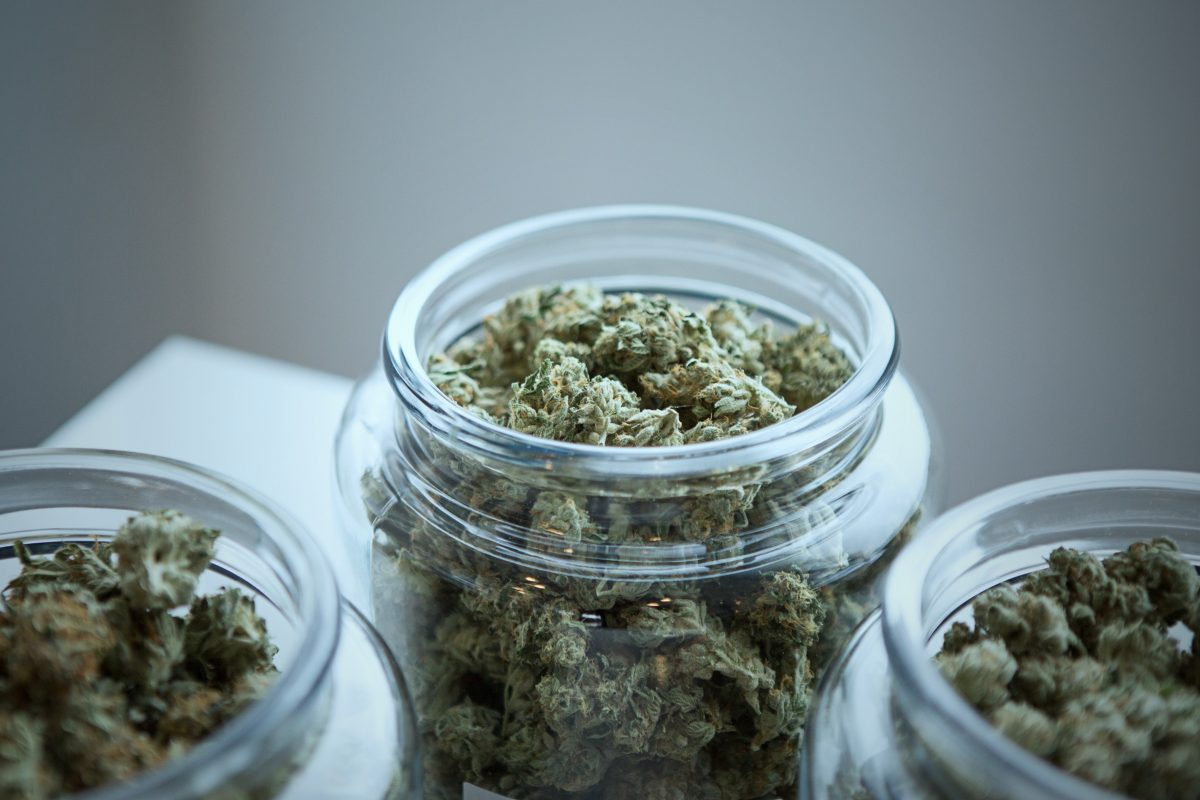 get budding 72791 unsplash The Weed Blog - Cannabis News, Culture, Reviews & More